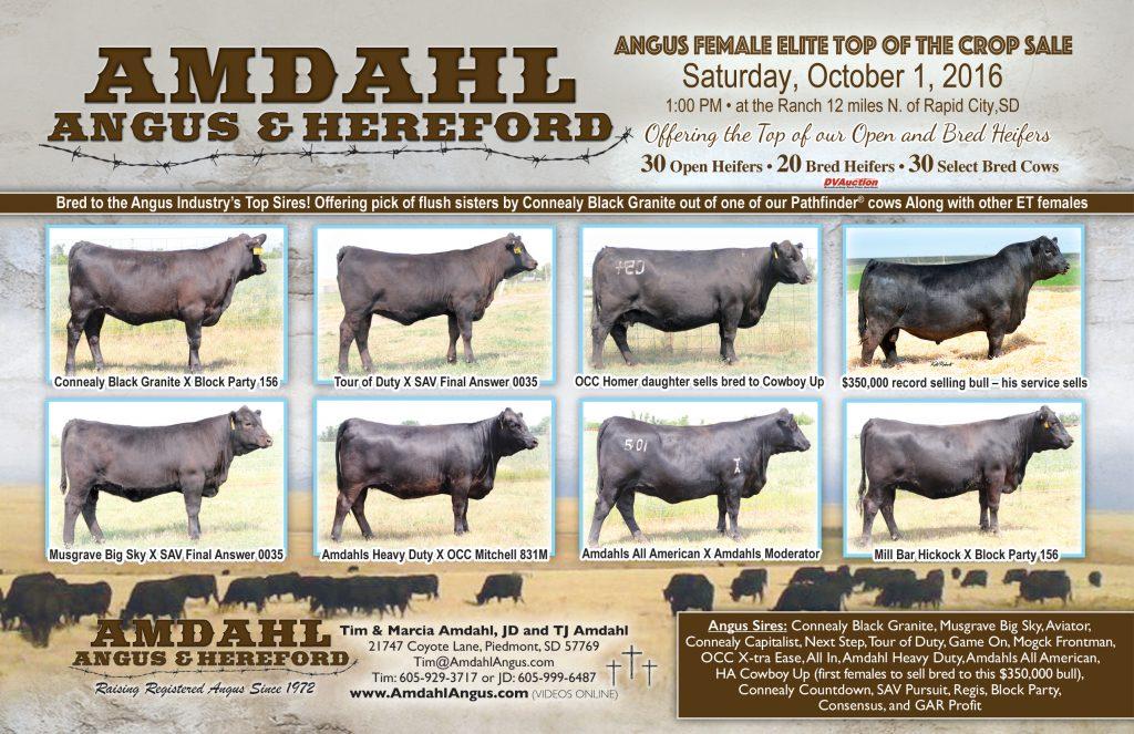 Amdahl Angus & Hereford Sale