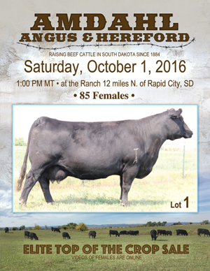 Amdahl Angus October Sale